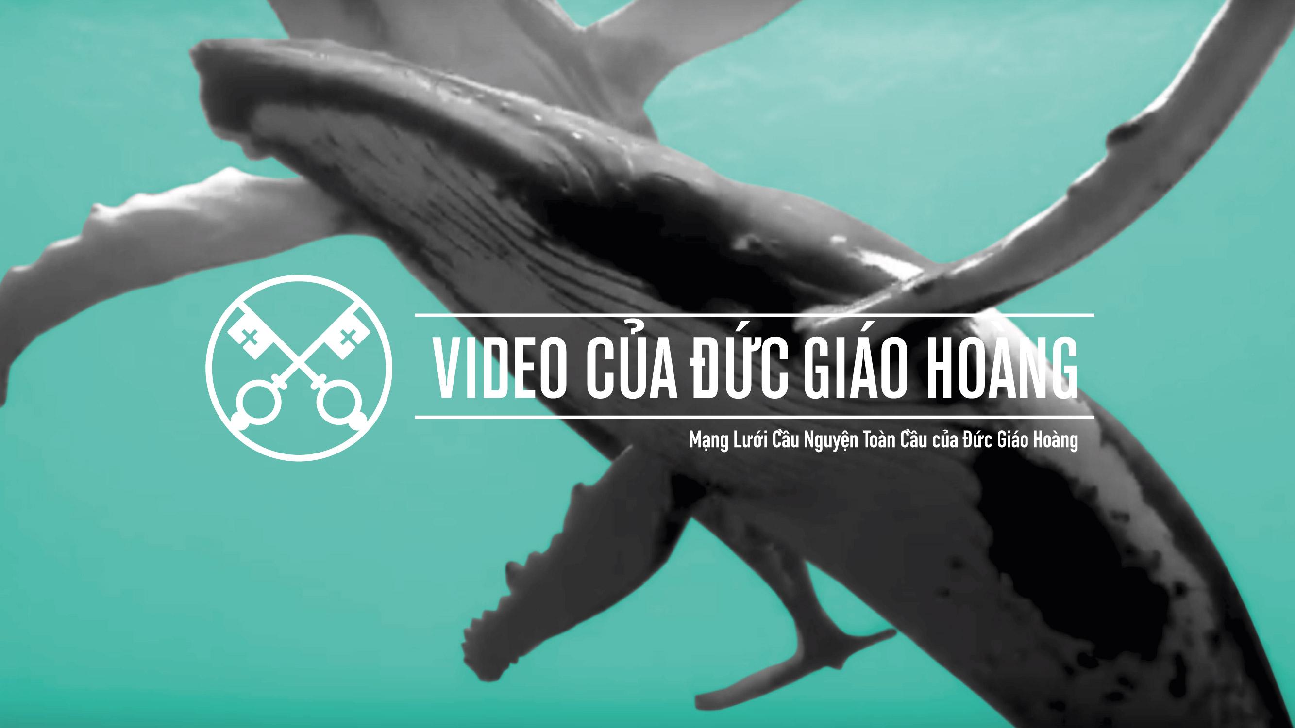 Tháng chín: Bảo Vệ Biển Cả