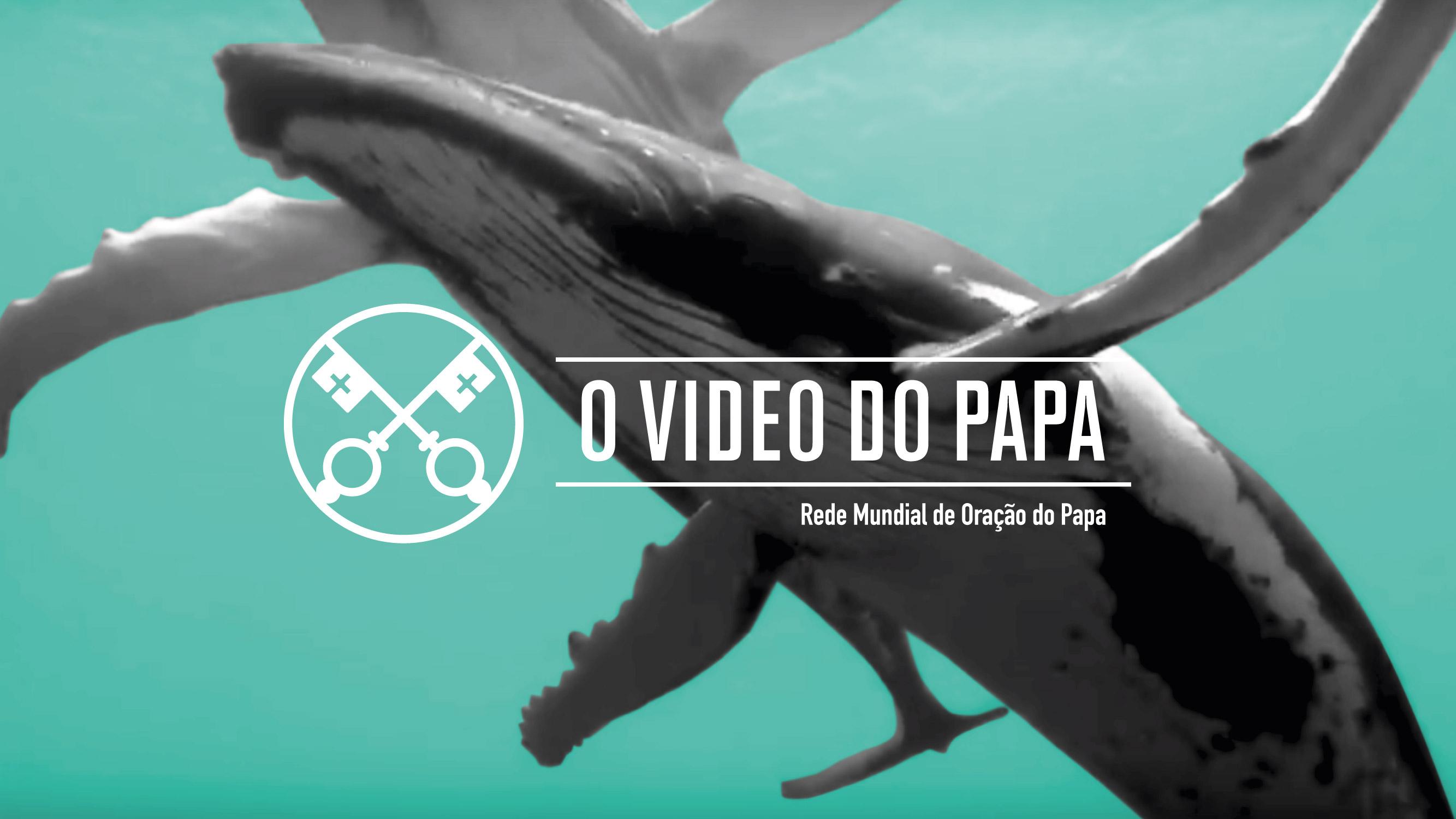 Proteger os Oceanos: prioridade do Papa Francisco neste mês