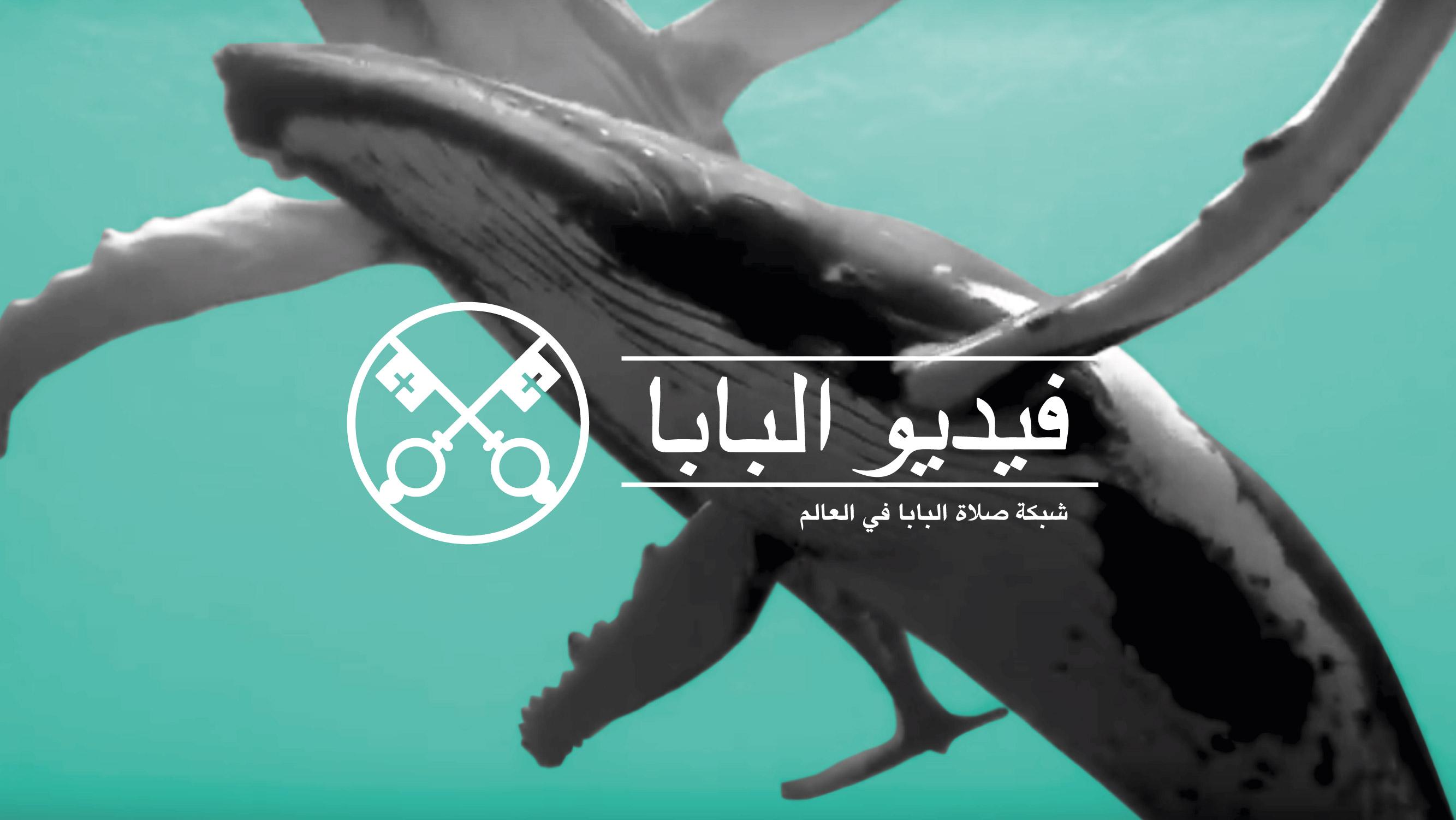 حماية المحيطات